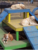 Gulliver's Doggie Daycare Franchise